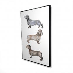 Framed 24 x 36 - 3D - Small dachshund dog