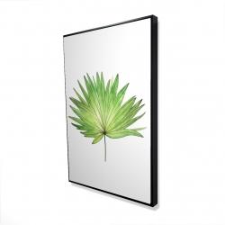 Framed 24 x 36 - 3D - Petticoat palm