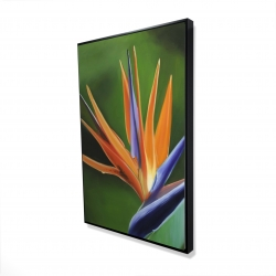 Framed 24 x 36 - 3D - Bird of paradise flower