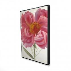 Framed 24 x 36 - 3D - Pink peony flower