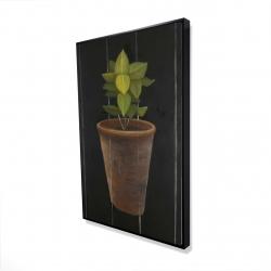 Framed 24 x 36 - 3D - Plant of bay leaves