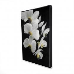 Framed 24 x 36 - 3D - Beautiful orchids