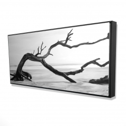 Framed 24 x 48 - 3D - Dead tree in the middle of water