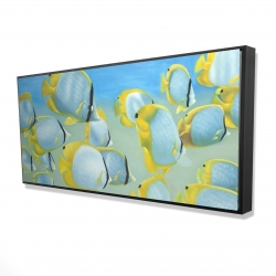 Framed 24 x 48 - 3D - Butterfly fishes