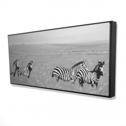 Framed 24 x 48 - 3D - Zebras in the savannah