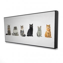 Framed 24 x 48 - 3D - Six cats lined up