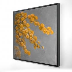 Framed 24 x 24 - 3D - Golden wattle plant
