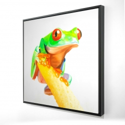Framed 24 x 24 - 3D - Curious red-eyed frog