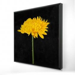 Framed 24 x 24 - 3D - Chrysanthemum