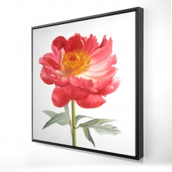 Framed 24 x 24 - 3D - Pink peony