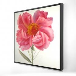 Framed 24 x 24 - 3D - Pink peony flower