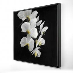Framed 24 x 24 - 3D - Beautiful orchids