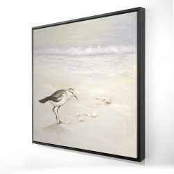 Framed 24 x 24 - 3D - Semipalmated sandpiper on the beach