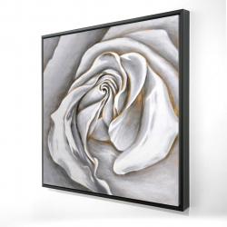 Framed 24 x 24 - 3D - White rose delicate