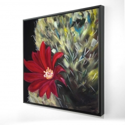 Framed 24 x 24 - 3D - Echinopsis red cactus flower