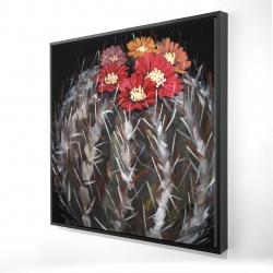Mammillaria cactus in bloom
