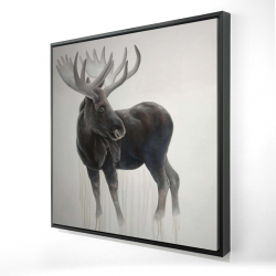 Framed 24 x 24 - 3D - Bull moose