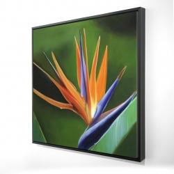 Framed 24 x 24 - 3D - Bird of paradise flower