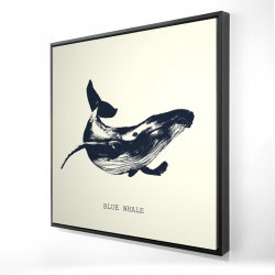 Framed 24 x 24 - 3D - Blue whale sketch