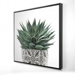 Framed 24 x 24 - 3D - Zebra plant succulent