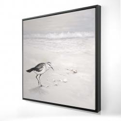 Framed 24 x 24 - 3D - Semipalmated sandpiper
