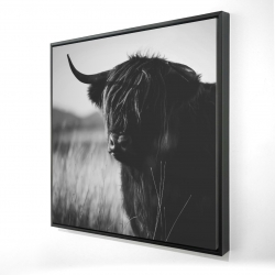 Framed 24 x 24 - 3D - Beautiful monochrome highland cow