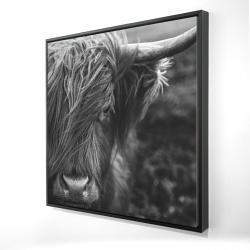 Framed 24 x 24 - 3D - Monochrome portrait highland cow