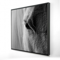 Framed 24 x 24 - 3D - The white horse eye