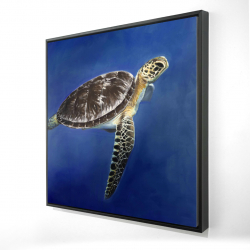 Framed 24 x 24 - 3D - Turtle in the ocean