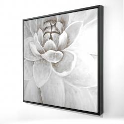 Framed 24 x 24 - 3D - Delicate white chrysanthemum