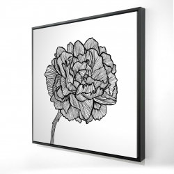 Framed 24 x 24 - 3D - Peony line