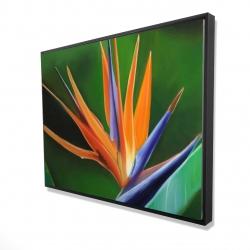 Framed 36 x 48 - 3D - Bird of paradise flower