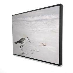 Framed 36 x 48 - 3D - Semipalmated sandpiper