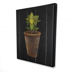 Framed 48 x 60 - 3D - Plant of bay leaves
