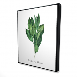 Framed 48 x 60 - 3D -  bay leaves bundle - fr