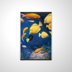 Magnetic 20 x 30 - 3D - Fish under the sea
