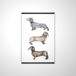 Magnetic 20 x 30 - 3D - Small dachshund dog