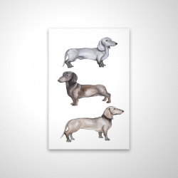 Magnetic 20 x 30 - 3D - Dachshund dogs