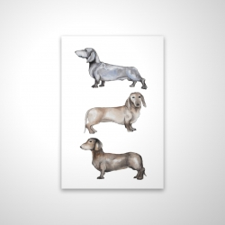 Small dachshund dog