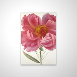 Magnetic 20 x 30 - 3D - Pink peony flower