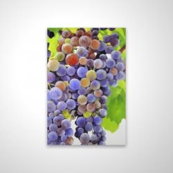 Magnetic 20 x 30 - 3D - Bunch of grapes