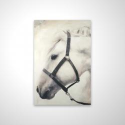 Magnetic 20 x 30 - 3D - Darius the white horse
