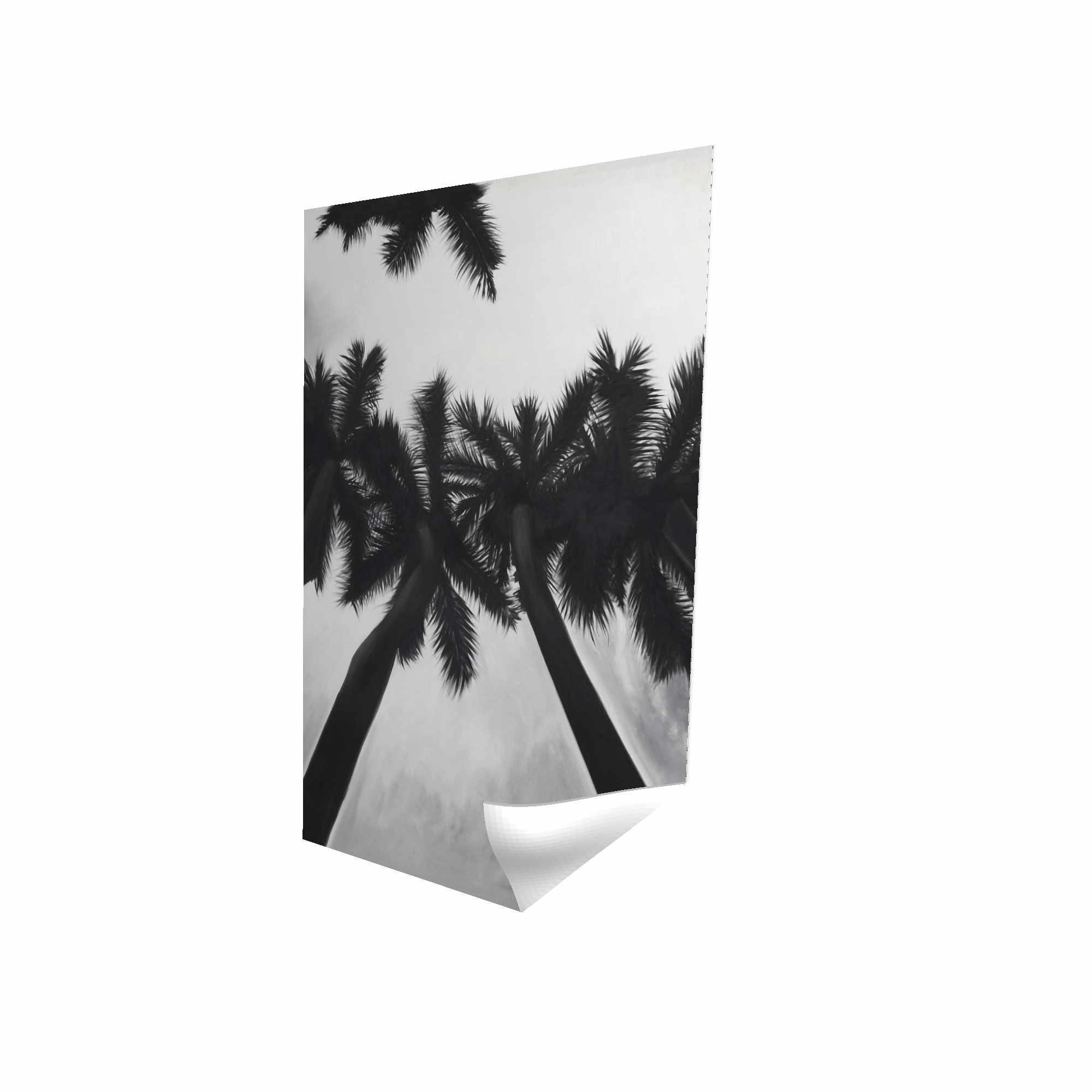Palmiers monochrome