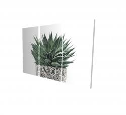 Canvas 24 x 36 - 3D - Zebra plant succulent