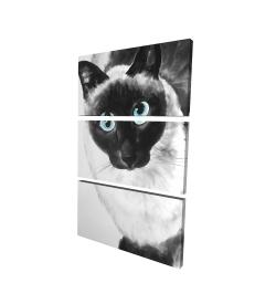 Canvas 24 x 36 - 3D - Blue eyes siamese cat