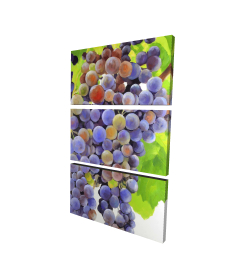 Canvas 24 x 36 - 3D - Bunch of grapes
