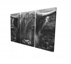 Canvas 24 x 36 - 3D - Monochrome portrait highland cow