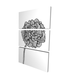 Canvas 24 x 36 - 3D - Peony line