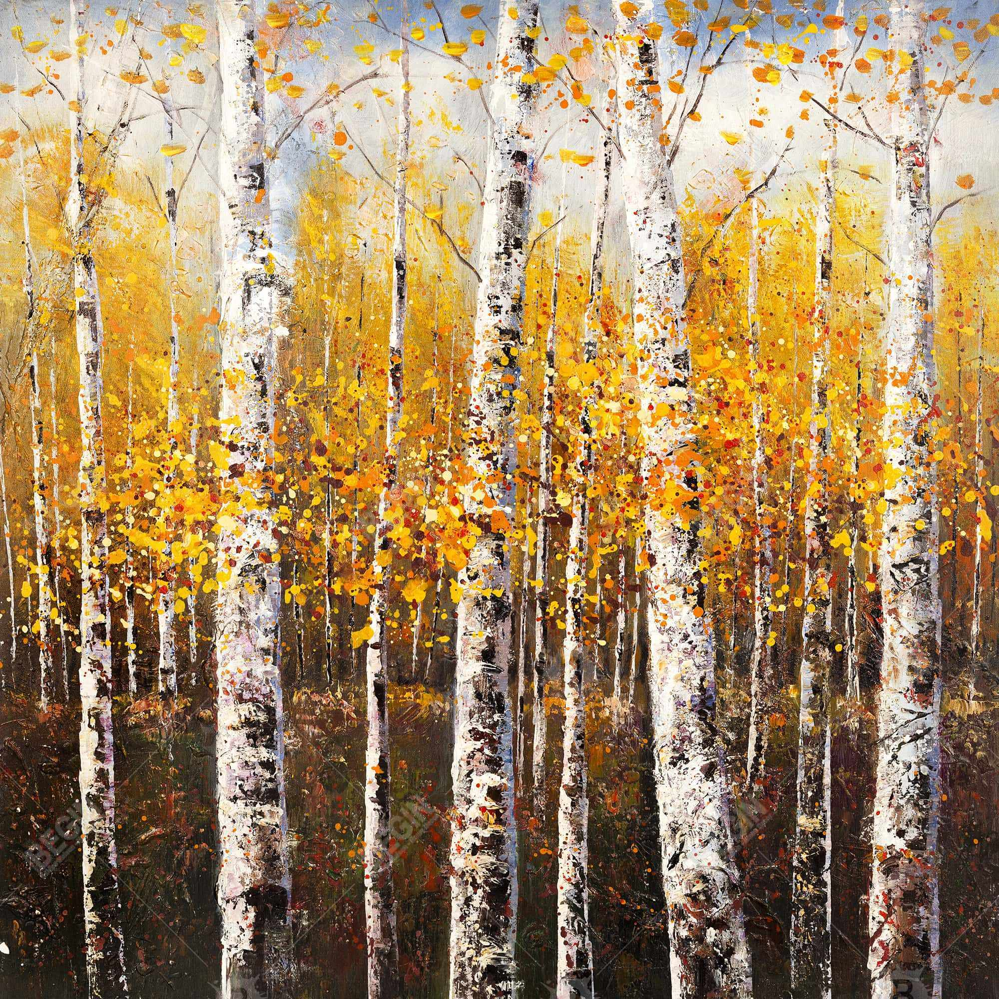 Birches by sunny day
