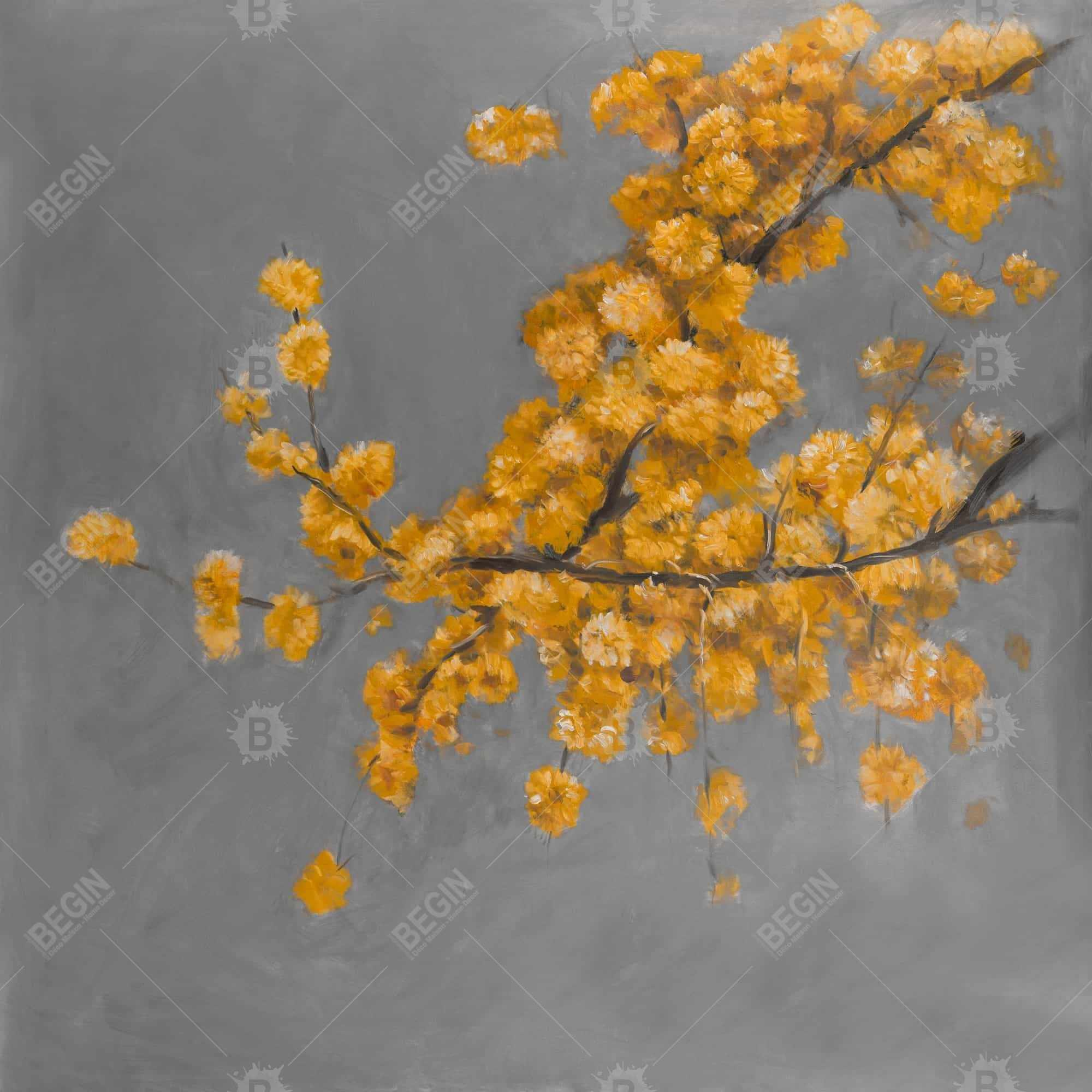 Golden wattle plant with pugg ball flowers